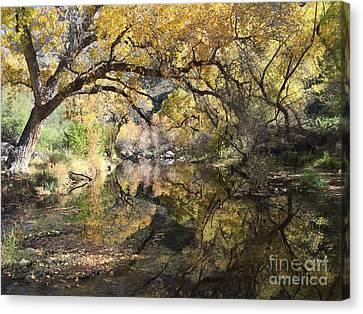 Sabino Canyon In Fall Canvas Print