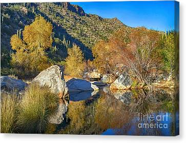 Sabino Canyon Reflecting Pool Fall Colors Hdr Canvas Print by Rincon Road Photography By Ben Petersen