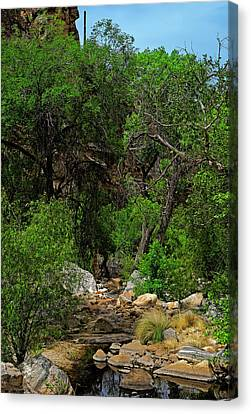 Canvas Print featuring the photograph Sabino Canyon V49 by Mark Myhaver