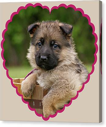 Canvas Print featuring the photograph Sable Puppy In Heart by Sandy Keeton