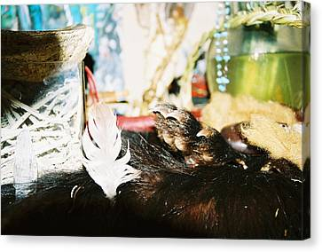 Canvas Print featuring the photograph Sacred Bear Claw Medicine by Kicking Bear  Productions