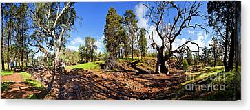 Canvas Print featuring the photograph Sacred Canyon, Flinders Ranges by Bill Robinson