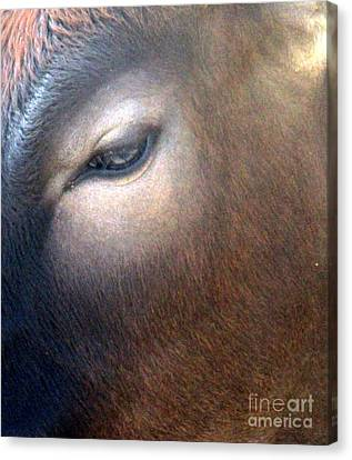 Canvas Print featuring the photograph Sacred Cow 5 by Randall Weidner