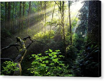 Sacred Light Canvas Print by Chad Dutson
