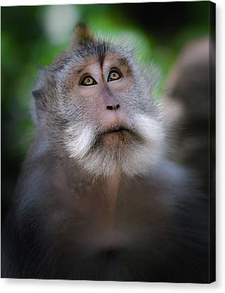 Muslims Canvas Print - Sacred Monkey Forest Sanctuary by Larry Marshall