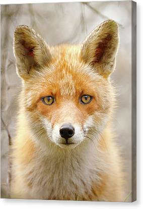 Sad Eyed Fox Of The Lowlands - Red Fox Portrait Canvas Print by Roeselien Raimond