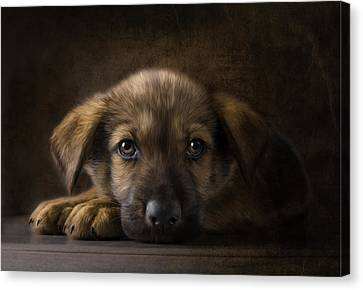 Sad Puppy Canvas Print by Bob Nolin