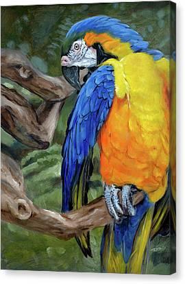 Safari Parrot Canvas Print by Christopher Reid