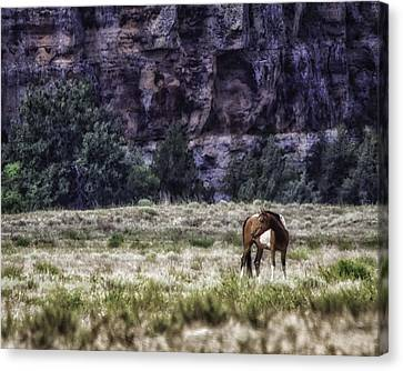 Safe In The Valley Canvas Print