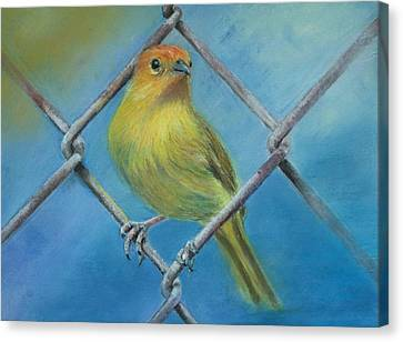 Canvas Print featuring the painting Safron Finch by Ceci Watson