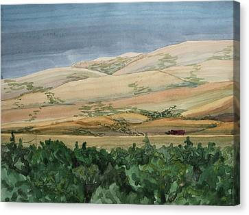 Sage Brush Field Canvas Print by Bethany Lee