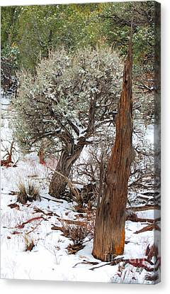 Canvas Print featuring the photograph Sage Bush Grand Canyon by Donna Greene