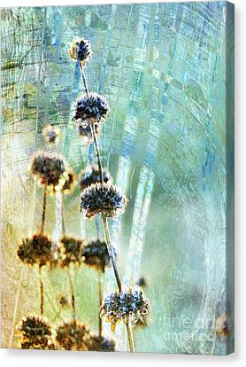 Sage Plant Canvas Print by Robert Ball