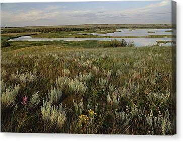 Sage Prairie And Marsh In Upper Souris Canvas Print by Gerry Ellis
