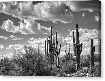 Canvas Print featuring the photograph Saguaro And Blue Skies Ahead In Black And White  by Saija Lehtonen
