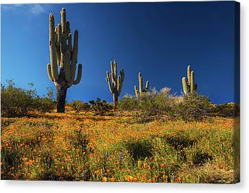 Canvas Print featuring the photograph Saguaro Cactus And Poppies Arizona by Dave Dilli
