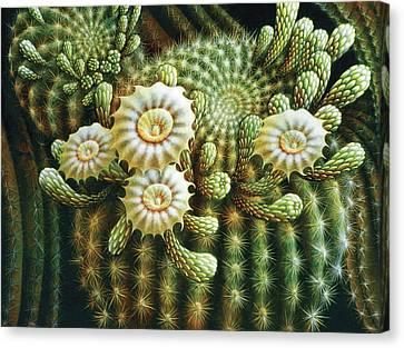 Saguaro Cactus Blossoms Canvas Print by James Larkin