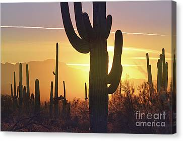 Saguaro Cactus Golden Sunset Mountain Canvas Print by Andrea Hazel Ihlefeld