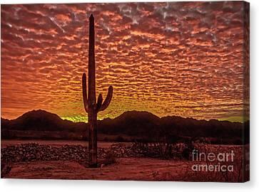 Saguaro Cactus  Sunrise Canvas Print