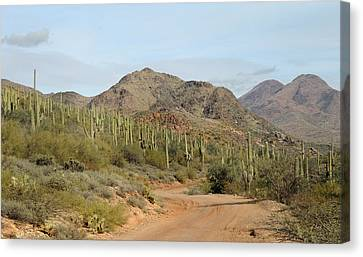 Old Country Roads Canvas Print - Saguaro Central by Gordon Beck