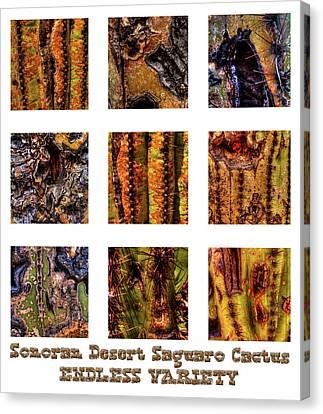 Saguaro Detail Endless Variety Canvas Print