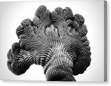 Saguaro Elephant Ear Canvas Print