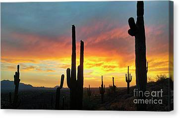 Canvas Print featuring the photograph Saguaro Sunset by Anthony Citro