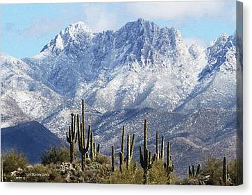 Saguaros At Four Peaks With Snow Canvas Print by Tom Janca