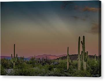 Saguaros Salute Rays Rising Canvas Print