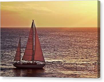 Sail Away Canvas Print by Maria Arango