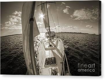South Carolina Canvas Print - Sailboat Sailing Charleston South Carolina by Dustin K Ryan