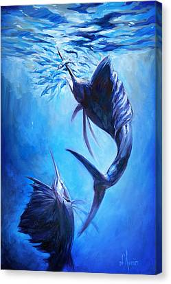 Sailfish And Ballyhoo Canvas Print by Tom Dauria