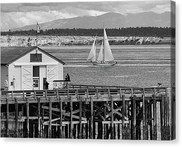 Sailing At Neah Bay Black And White Canvas Print by Dan Sproul