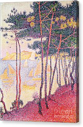 Sailing Boats And Pine Trees Canvas Print by Paul Signac