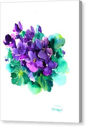 African Violets Canvas Print - Sainpaulias, African Violets by Suren Nersisyan