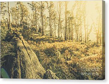 Saint Marys Pass State Reserve Forest Canvas Print by Jorgo Photography - Wall Art Gallery