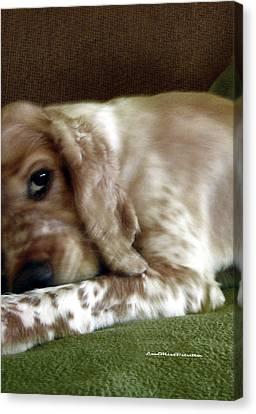 Buy Dog Art Canvas Print - Saint Shaggy Art Photograph  6 by Miss Pet Sitter