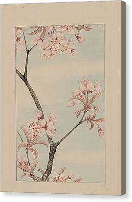 Sakura Cherry Canvas Print