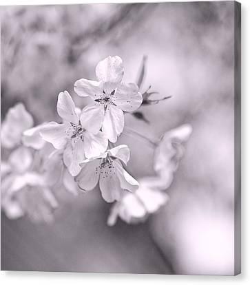 Sakura I Canvas Print