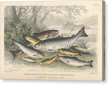 Salmon And Trout Canvas Print