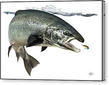 Salmon Canvas Print by Anders Ovesen