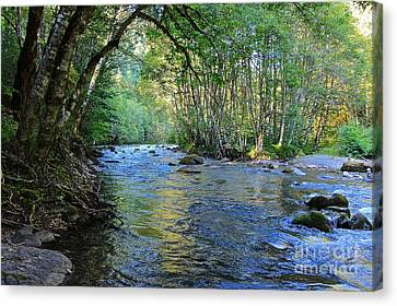 Salmon Creek Majestic  Canvas Print by Tim Rice