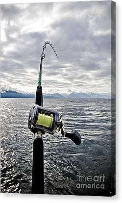 Salmon Fishing Rod Canvas Print by Darcy Michaelchuk