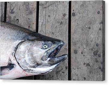 Salmon On Deck Canvas Print
