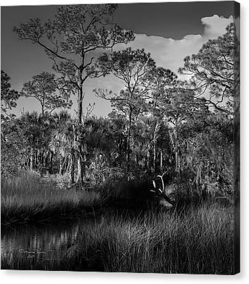 Mangrove Forest Canvas Print - Salt Springs by Marvin Spates