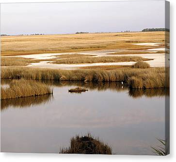 Saltwater Marsh Canvas Print by Marty Koch