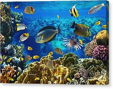 Clown Fish Canvas Print - Saltwater Reef Fish by Garland Johnson