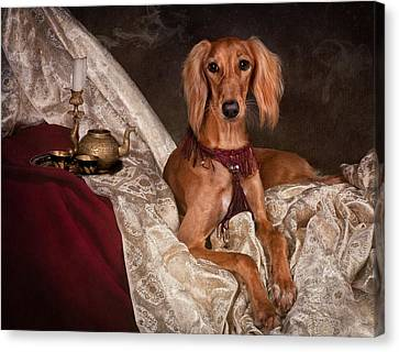 Canvas Print - Saluki Dog by Tanya Kozlovsky