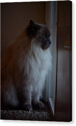 Sam Waits Canvas Print