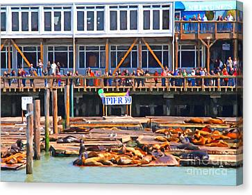 San Francisco Pier 39 Sea Lions . 7d14272 Canvas Print by Wingsdomain Art and Photography